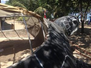 クタビーチの亀2