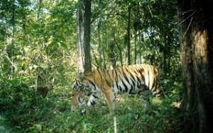 世界遺産・トゥンヤイ-フワイ・カーケン野生生物保護区2