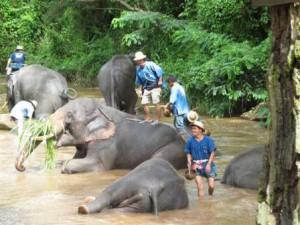 タイ旅行-チェンマイ2