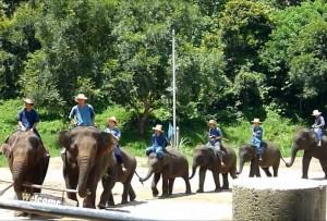 タイ旅行-チェンマイ1