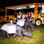 シンガポールのナイトサファリ★Night Safariを徹底ガイド!