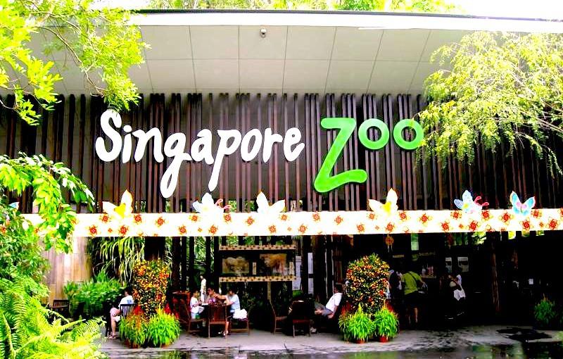 シンガポール動物園を熱烈ガイド★Singapore Zoo