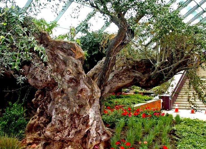 シンガポールの植物園-ガーデンズ・バイ・ザ・ベイ-2