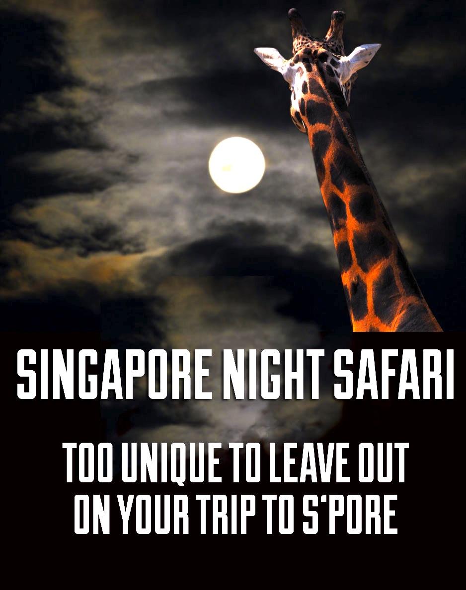 シンガポールのナイトサファリ-NightSafari-19
