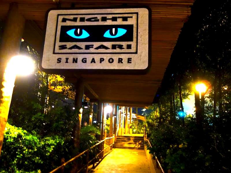 シンガポールのナイトサファリ-NightSafari-6
