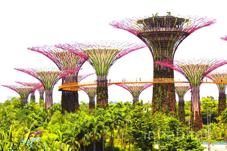 シンガポールの植物園★ガーデンズ・バイ・ザ・ベイの徹底ガイド