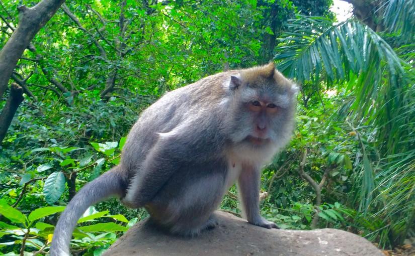バリ旅行でウブドの観光ならモンキーフォレスト★MonkeyForest