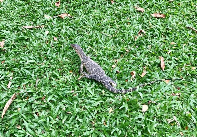 ルンピニー公園-バンコク-無料-観光スポット-トカゲ