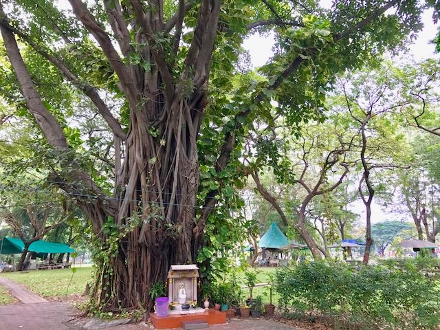 バンコク-おすすめ-観光スポット-ルンピニー公園-11